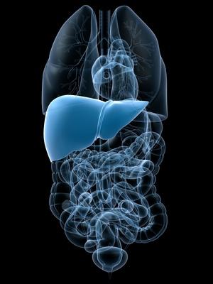 КТ органов брюшной полости,